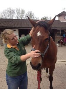 Genevieve treating Twiglet the horse
